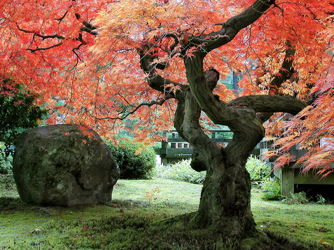 j1 Японский сад – чарующая скромность