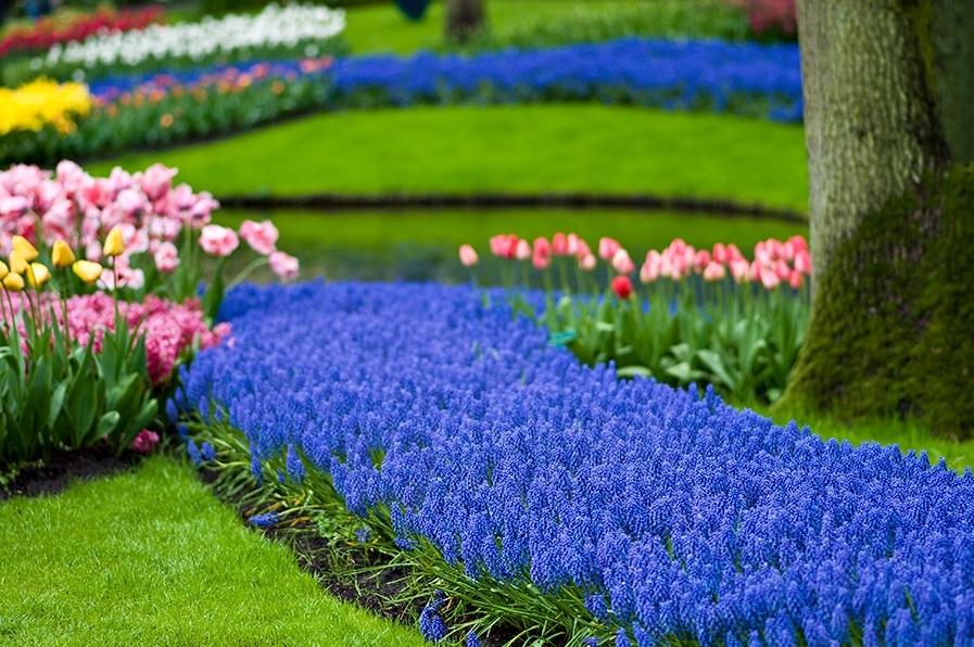 24 Цветочные клумбы на даче