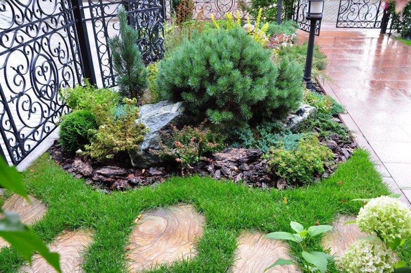 14 Хвойные растения в саду. Продолжение