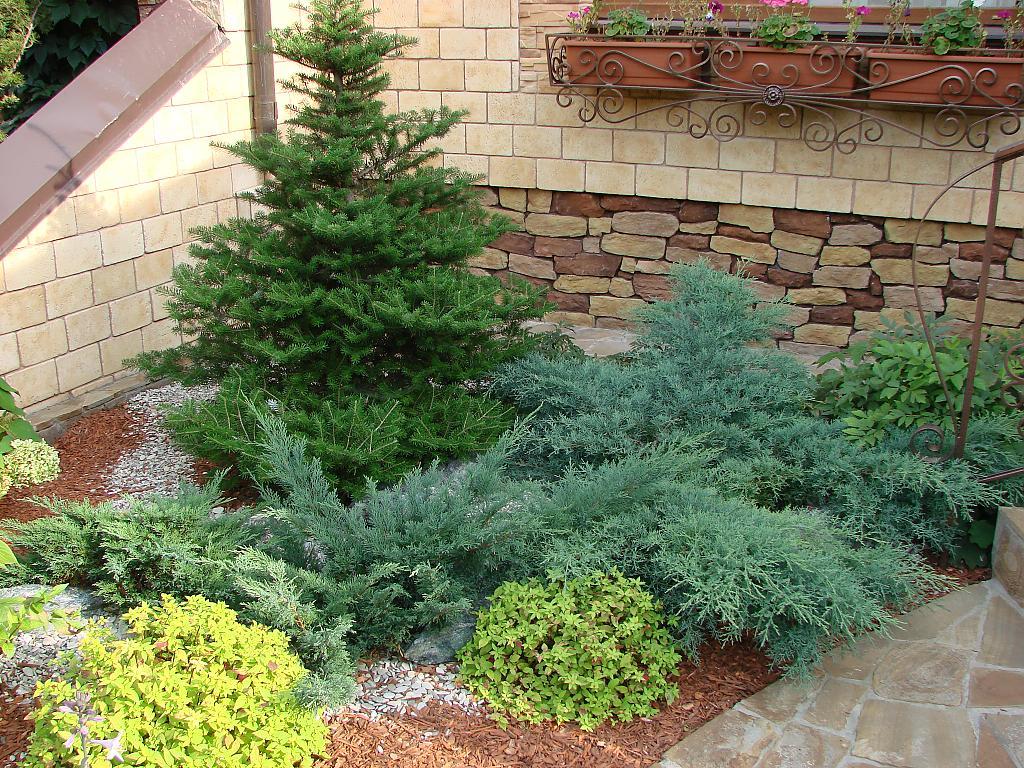 24 Хвойные растения в саду. Продолжение