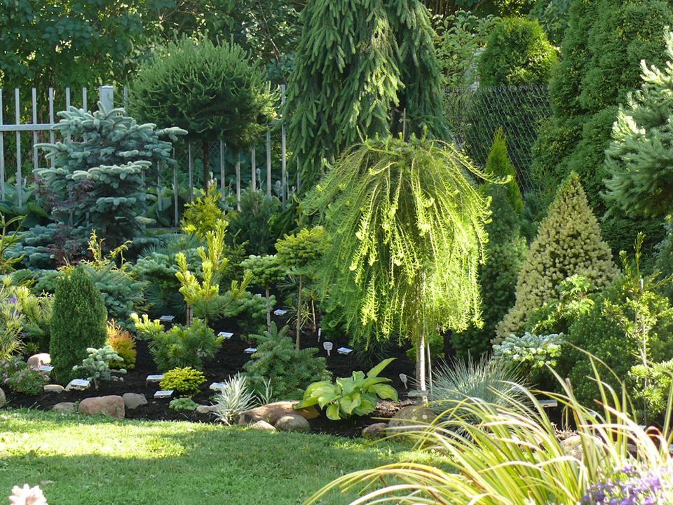 35 Хвойные растения в саду. Продолжение