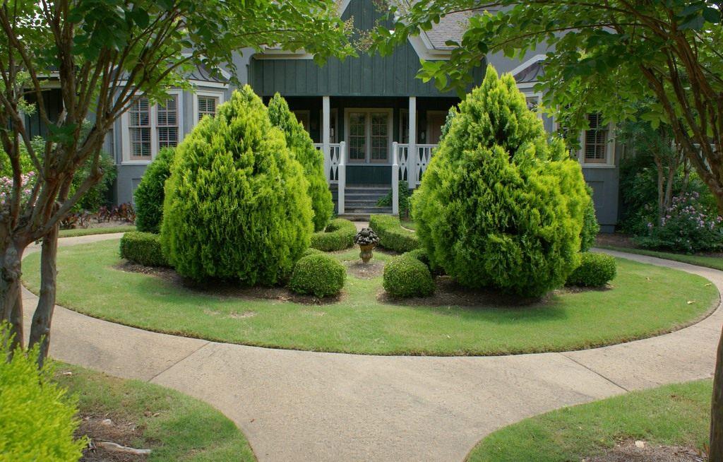 45 Хвойные растения в саду. Продолжение