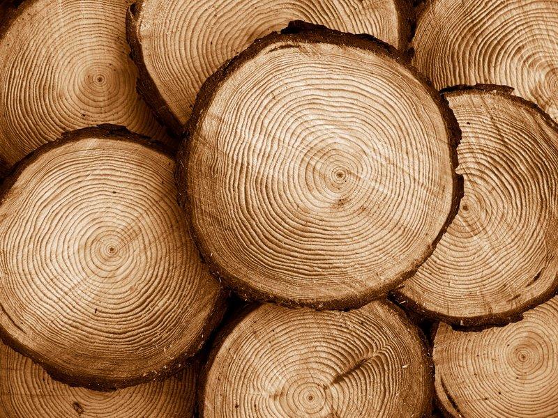 116 Выбираем древесину на основе ее свойств