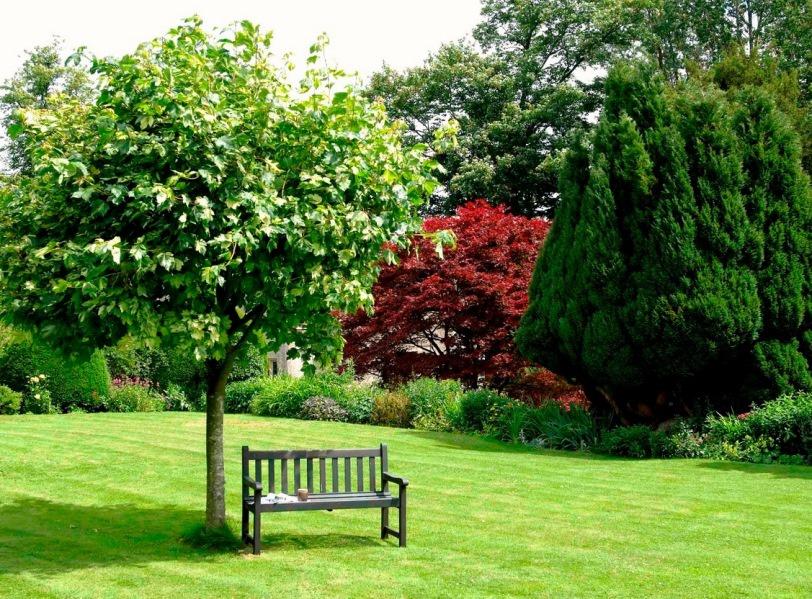 14 Правильное распределение пород деревьев в саду