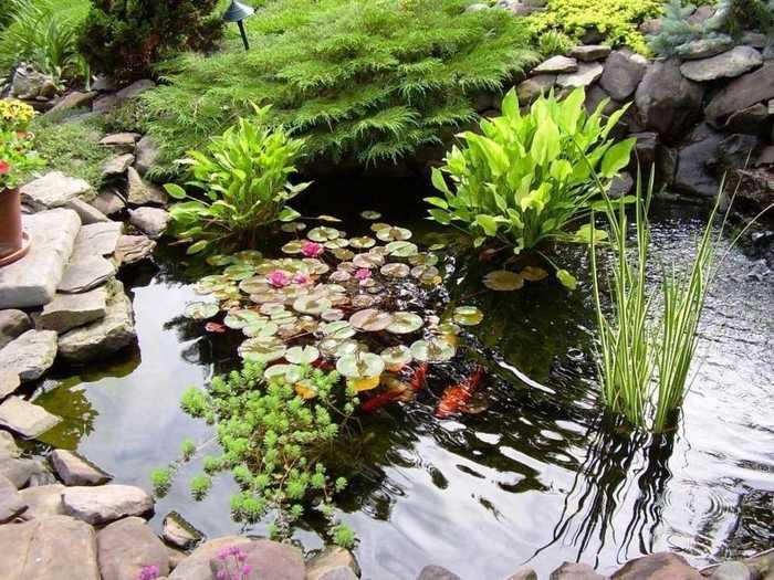 25 Пруд в саду, основные принципы создания