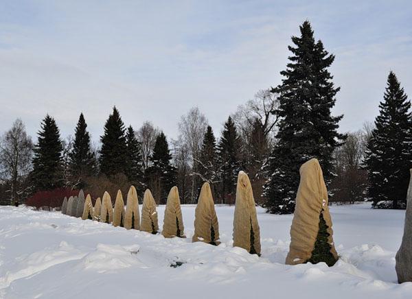 118 Как зимой защитить деревья от обморожения
